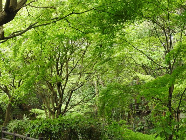 4月の、緑道の風景 2020/04/12撮影