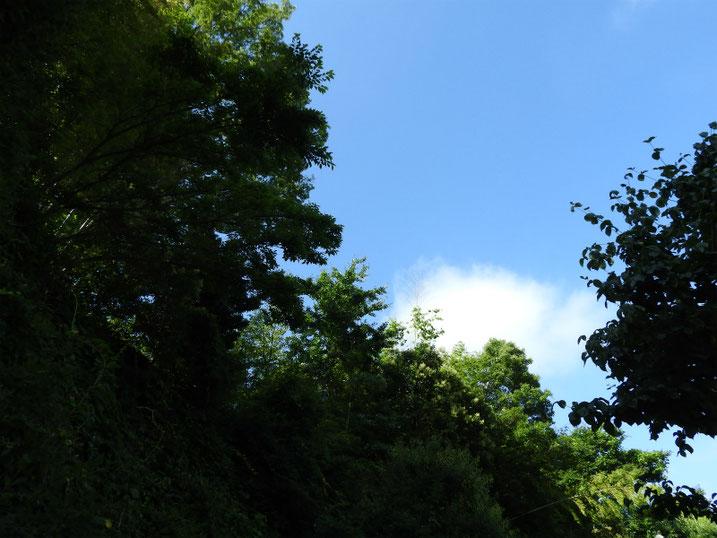 梅雨の合間の散策路 2021/07/10撮影