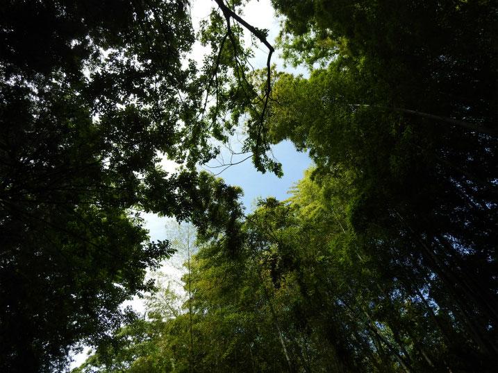 5月の親水緑道の空 2020/05/17撮影