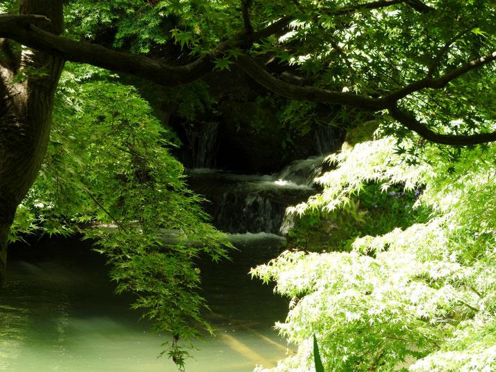 5月の親水公園池 2020/05/11撮影