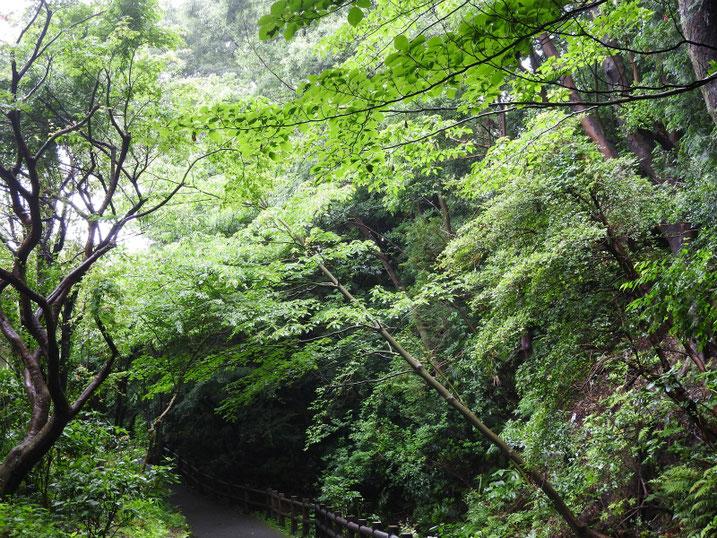 親水緑道の風景 2020/06/14撮影