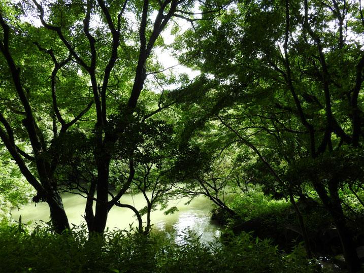 親水公園の池の風景 2021/07/10撮影
