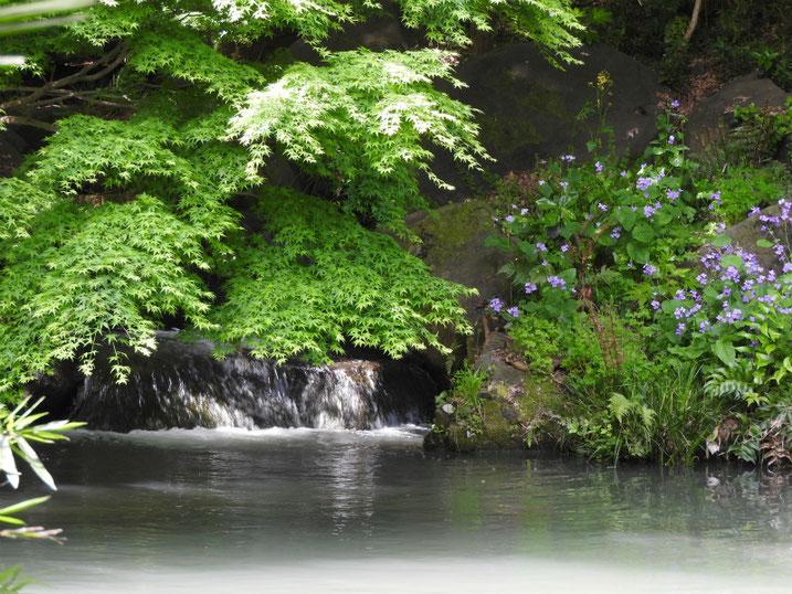 4月の親水公園池 2020/04/26撮影
