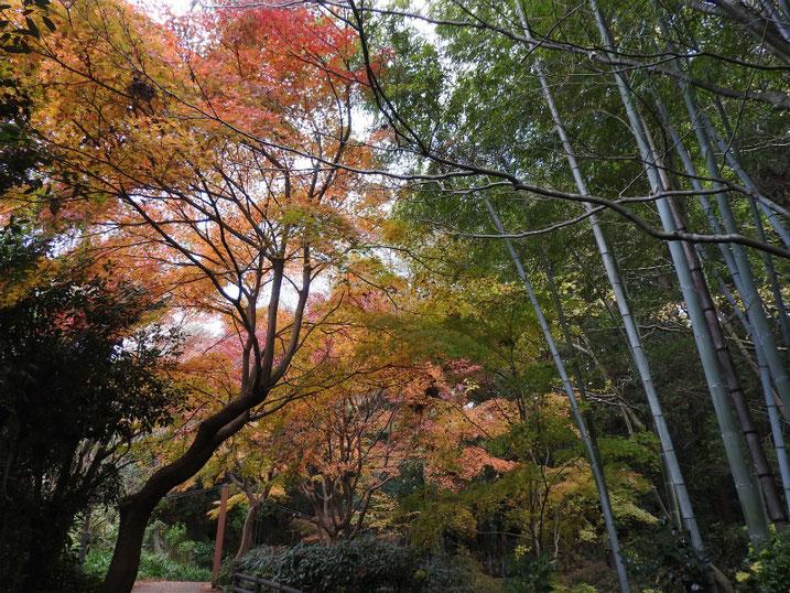 親水緑道の紅葉 2020/12/11撮影