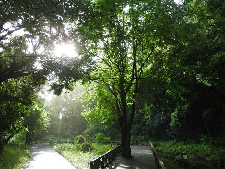 散策路公園の朝 2020/06/02撮影