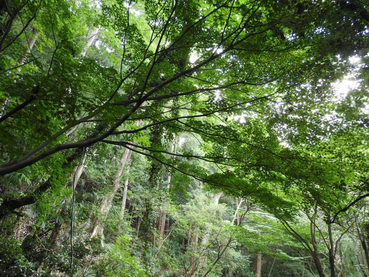 親水緑道の風景 2020/08/04撮影