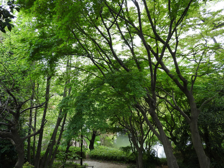 散策路の新緑風景 2021/03/31撮影