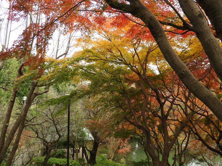 親水公園の紅葉 2020/12/11撮影