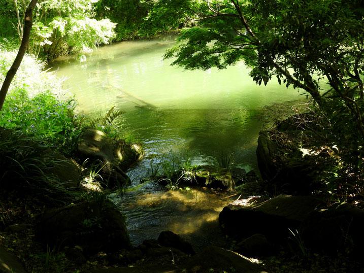 5月の親水公園の池 2020/05/11撮影