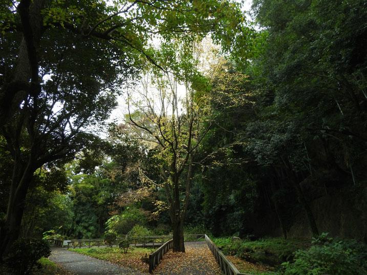 散策路公園 2020/11/09撮影