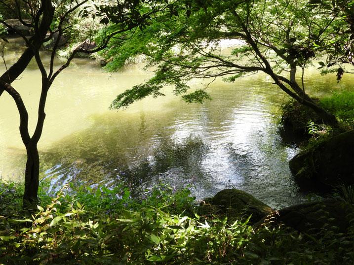 親水公園の池の風景 2021/04/18撮影