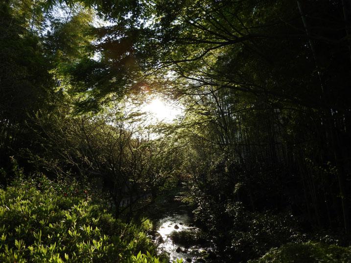 4月の親水緑道、沢の風景 2020/04/05撮影