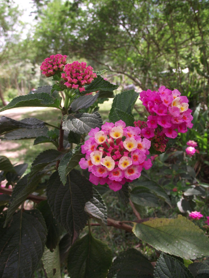 flowers El Jardin campsite and accomodation, Samaipata, Bolivia