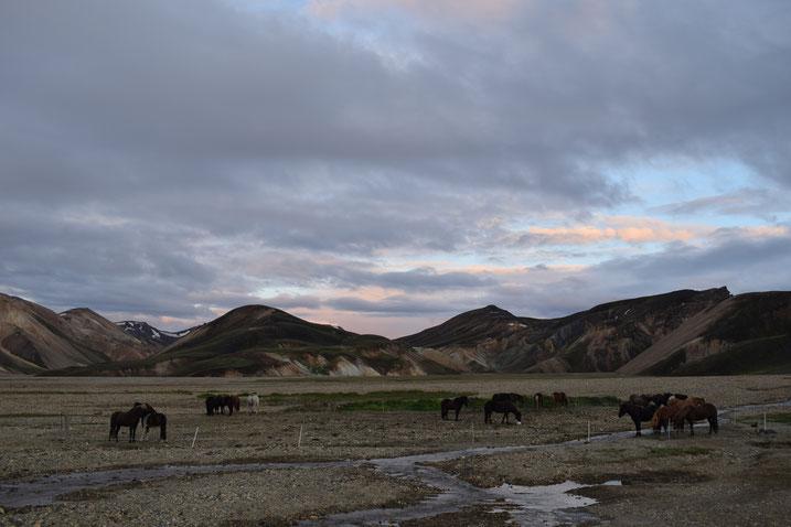 horses at Landmannalaugar, Laugavegur, Fjallabak