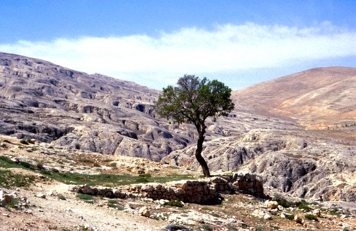 Gebirge mit Wüste