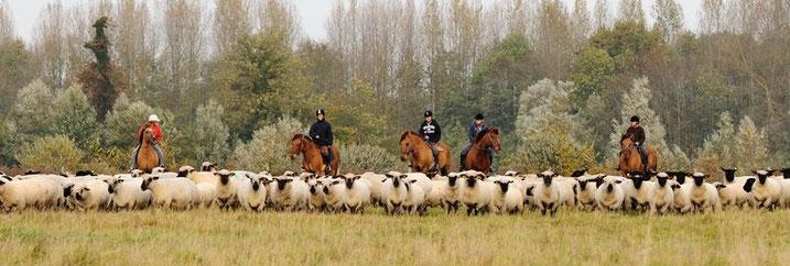 camping accueil de chevaux et cavaliers en baie de somme