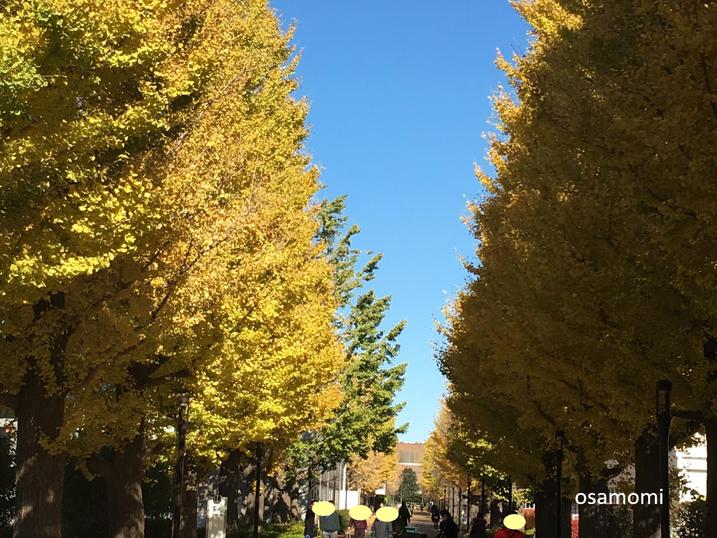 昭島駅北口イチョウ並木通りで開催中!競歩技術を取り入れたオサモミウォーキング教室!