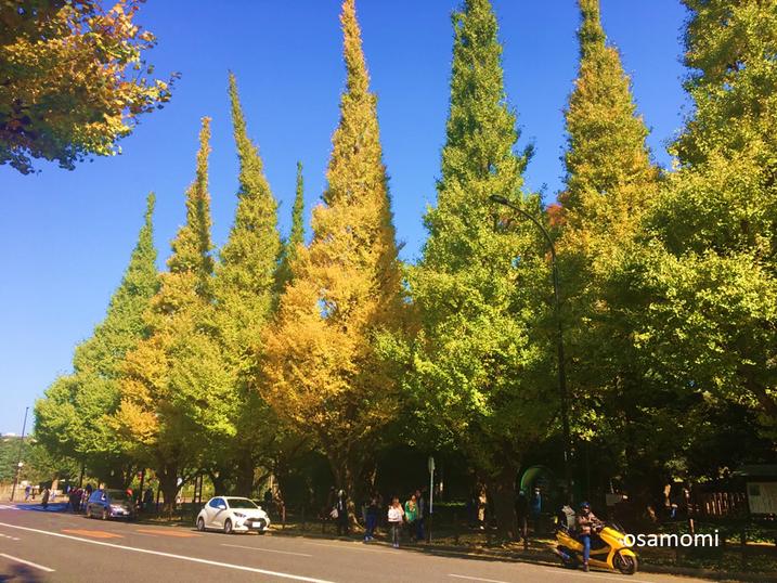 外苑、イチョウ並木通り、競歩を学ぶなら、昭島市のオサモミウォーキング教室。