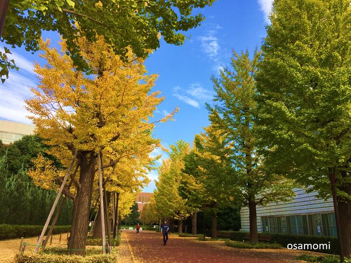 昭島市北口のイチョウ並木通りで開催!競歩教室、昭島市のオサモミウォーキング教室。