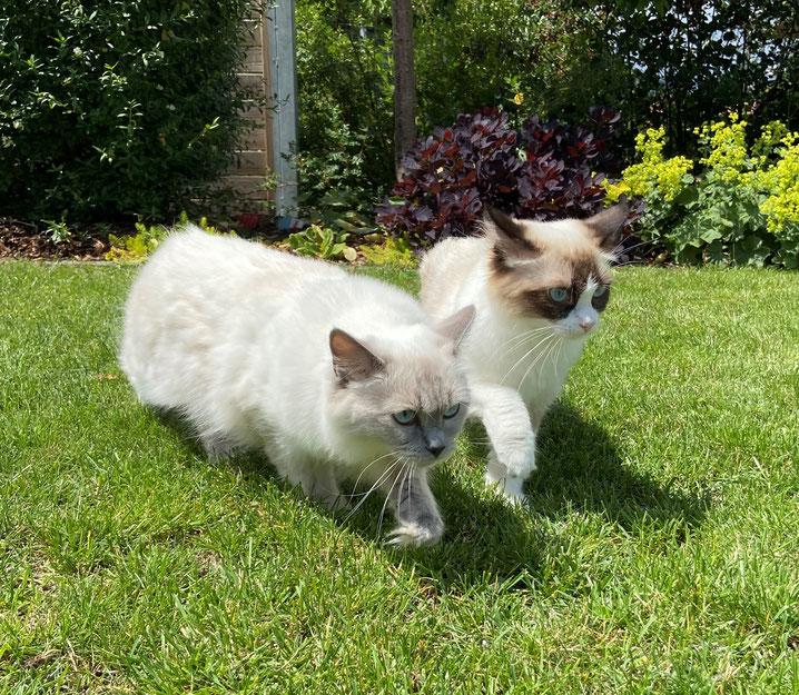 Peaches und Baby Q - zwei Freundinnen und Halbschwestern zusammen im Garten unterwegs