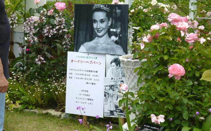 女優ヘップパーンさんの写真と、その名がついたバラの花(右)