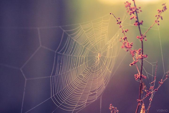 zauberspinne | www.visovio.de | projekt traumtiere | spinnennetz