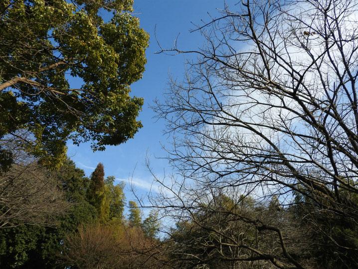 冬の朝 散策路 180210撮影