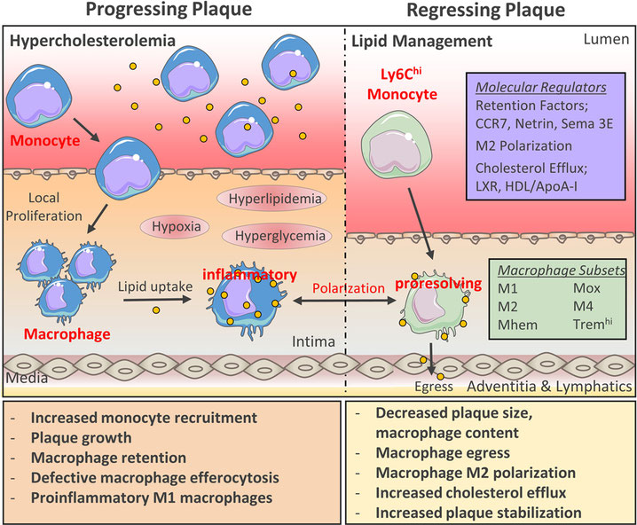 Follow-Up of Patients Suffering Atherosclerosis