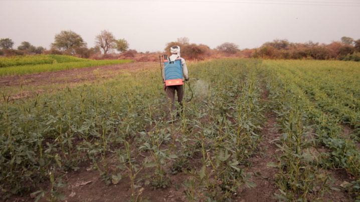Ein Bauer besprüht die Felder in Dhanoli mit Pestiziden.