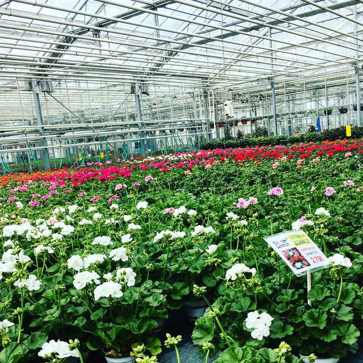 Je vous suggère de visiter les serres du Lycée horticole les Jardins Plixbourg à Wintzenheim. Les activités de l'exploitation touchent à toutes les étapes, de la production jusqu'à la vente, autour d'un pôle horticole et d'un pôle maraîchage biologique.