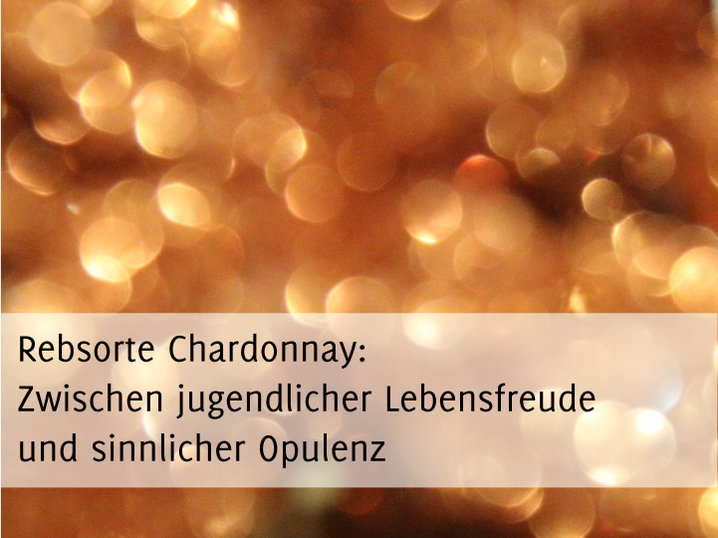 Artikelbild: Rebsorte Chardonnay