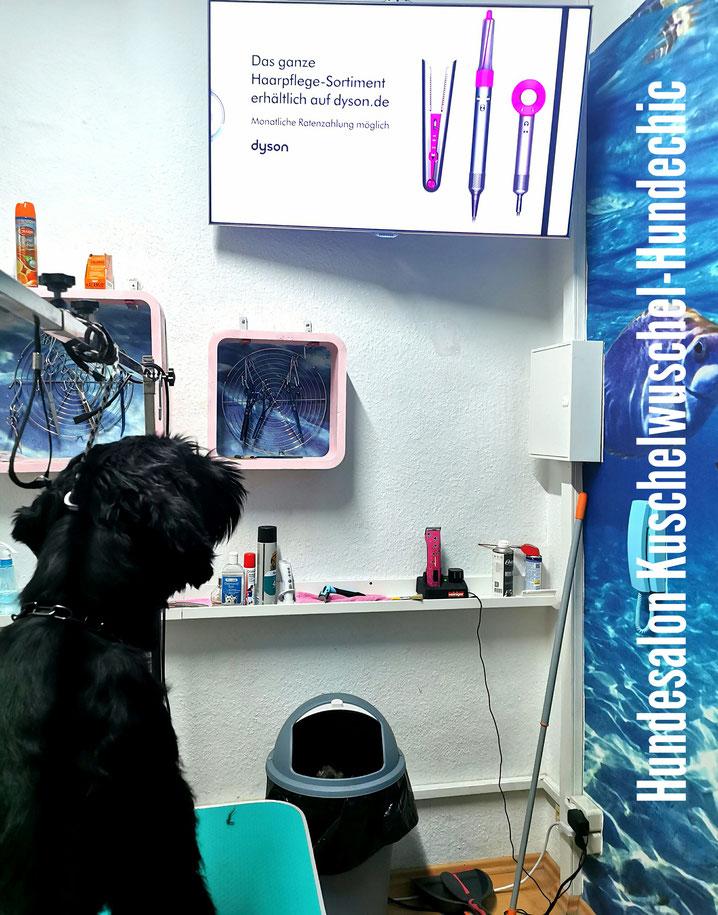 Der Hundesalon Kuschelwuschel-Hundechic ist eben der etwas andere Hundefriseur