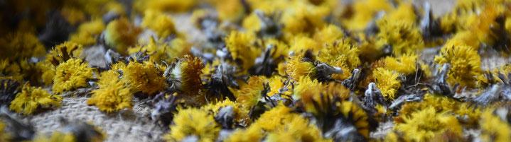 krautblog.at, krautblog.com, krautfotografie.com, krautfotografie.at, krautblog, Blog, Gartenblog, Kräuterblog, Nachhaltigkeit, Lebensmittel, Landwirtschaft, Zero Waste, Achtsamkeit, Andrea Blum, Fotografie, Texte, Konzepte, Natur, Kräuter