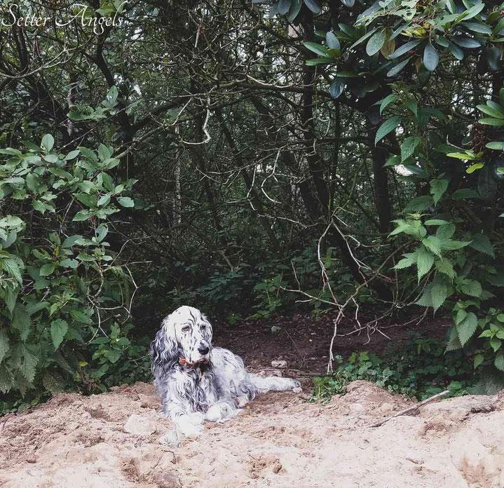 Luisa hat im Verhalten und Aussehen große Ähnlichkeit mit Bijou by white Angel.