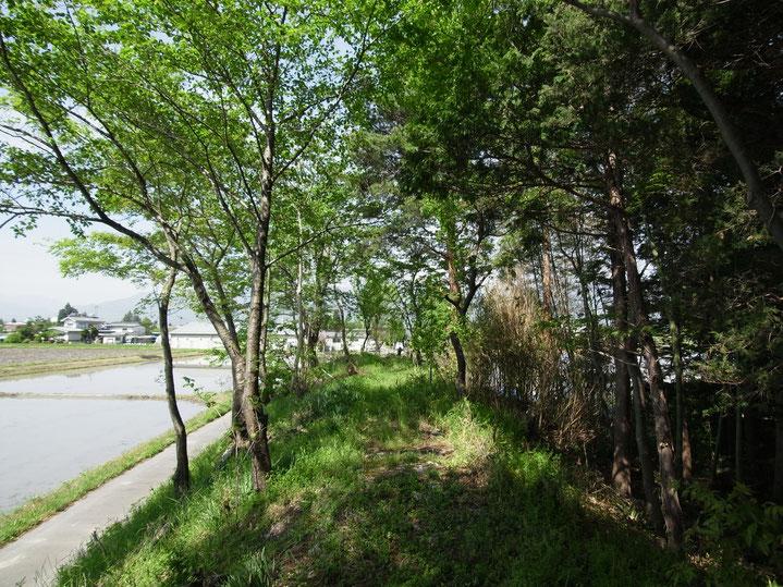 徳治郎の家 安曇野市 土塁 屋敷林