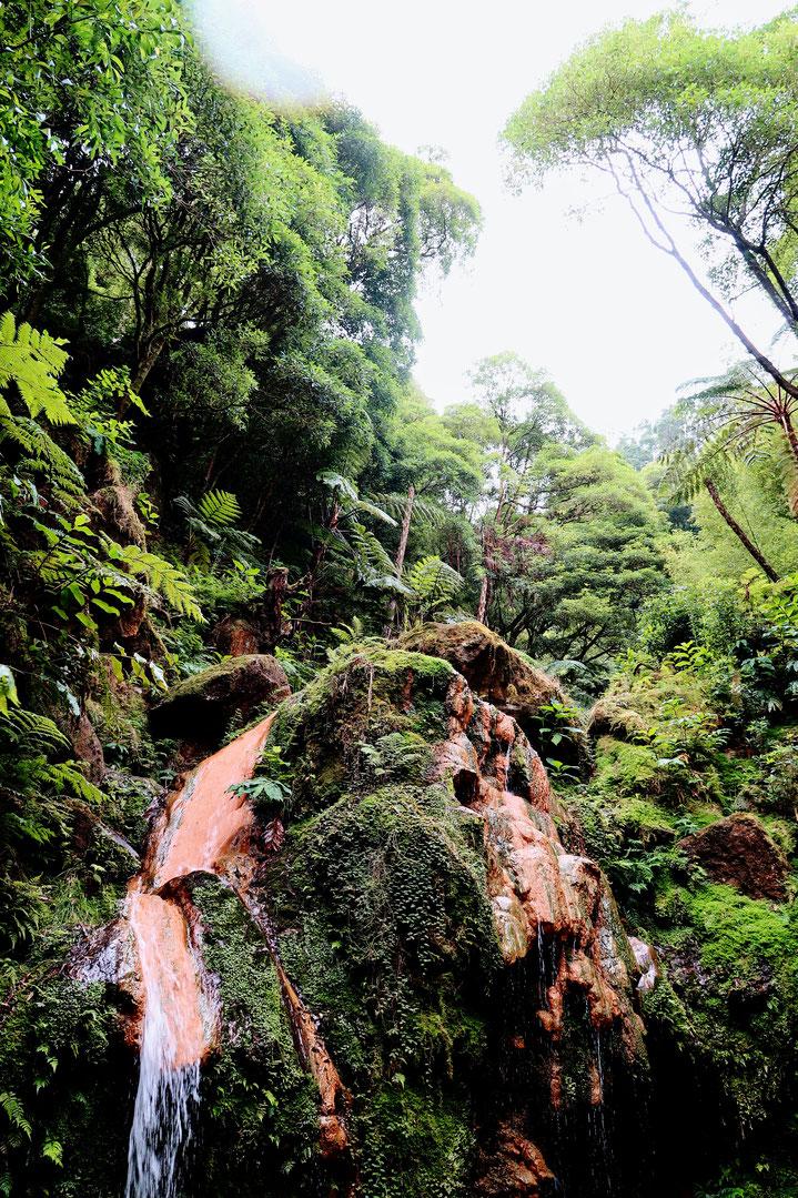 Caldeira Velha - Sao Miguel