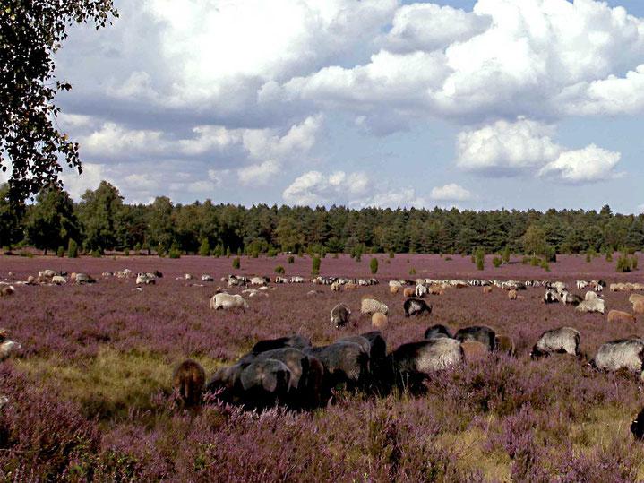 Oertzewinkel Camping - Camping in der Lüneburger Heide