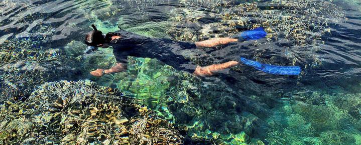 Schnorcheln, Tauchen, Tagesausflug Menjangan Island ab Lovina, Dencarik, Banjar, Pemuteran