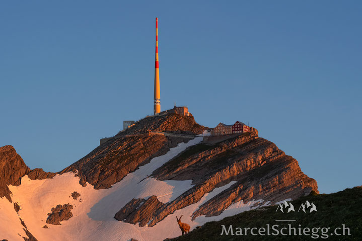 Alpstein, Steinbock, Steinböcke, Alter Säntis, Säntis, Marcel Schiegg, Appenzell, Rotsteinpass, Appenzellerland