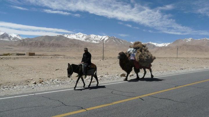 On retrouve les chameaux, comme en Mongolie!