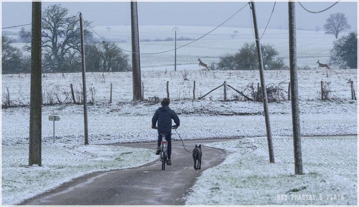 Jaap en Lars zijn net onderweg voor een r ondje fietsen... springen daar net een paar reeen voorbij...