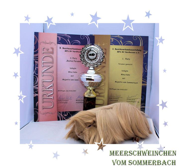 Majestix vom Sommerbach 24.06.17