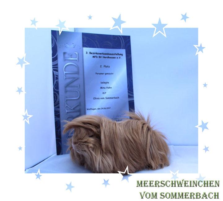 Olivia vom Sommerbach 24.06.17