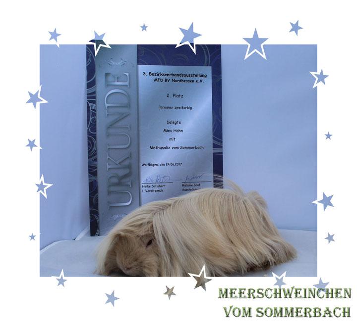 Methusalix vom Sommerbach 24.06.17
