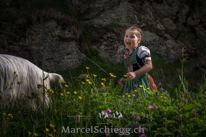 Öberefahre, Alpfahrt, Alpaufzug, Appenzell, Alpstein, Marcel Schiegg, Kühe, Ziege, Tracht, Brauchtum, Tradition, Hornkuh, Bläss