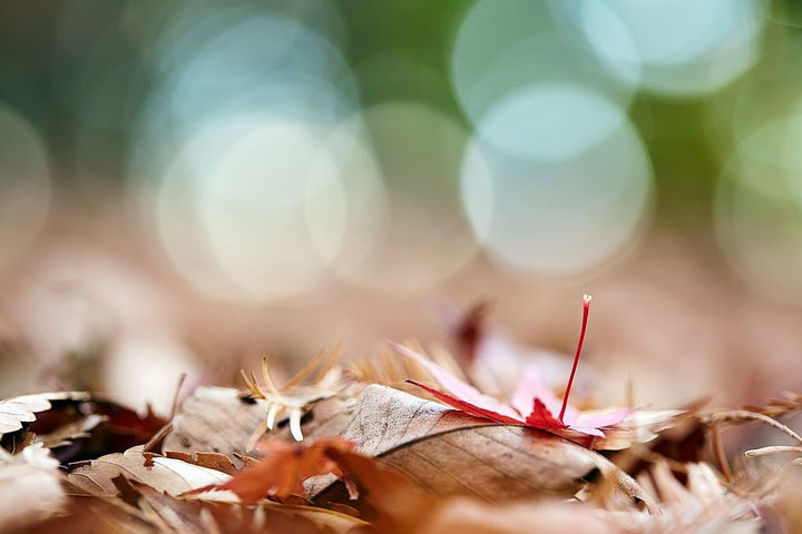 足立区,落ち葉,秋,ランプシェード