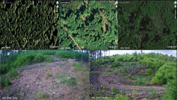 Forstwirtschaft Hessen, BI Fight for Forest Odenwald H. Günder