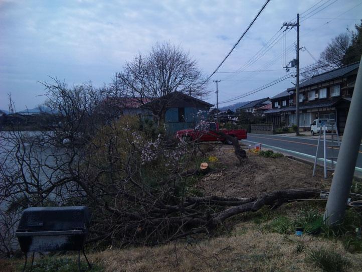 伝説のログビルダーのチェンソーも今や植木の伐採用