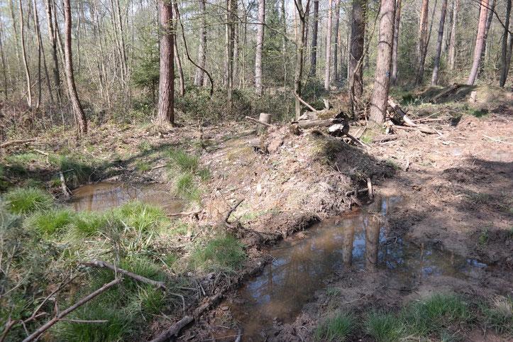 Alter mehrjähriger permanenter Baggertümpel, mittlerweile natürliches Gewässer (links im Bild) neben einer im Frühjahr 2019 wiederbefahrenen Rückegasse (rechts im Bild) in Gaggenau.