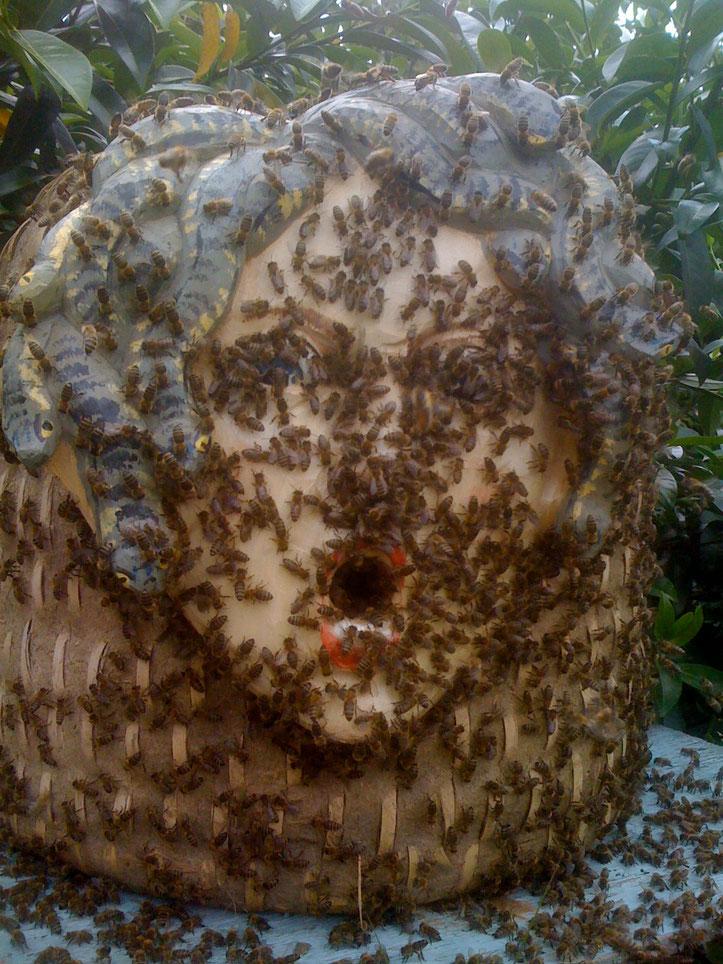 Der original Lüneburger Stülper ist mit einer Bannkorbmaske ausgestattet. Der Bannkorb sollte Honigdiebe abschrecken. Hier läßt sich ein Bienenschwarm nieder. Die Bienenkönigin ist auf der Stirn der Medusazu finden.